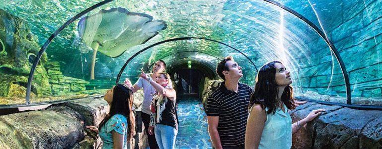 sea-life-sydney-aquarium
