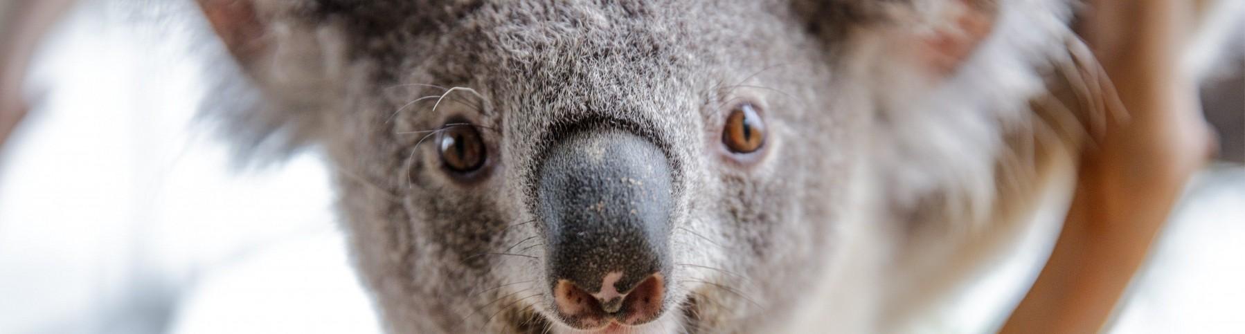wild-life-sydney-zoo